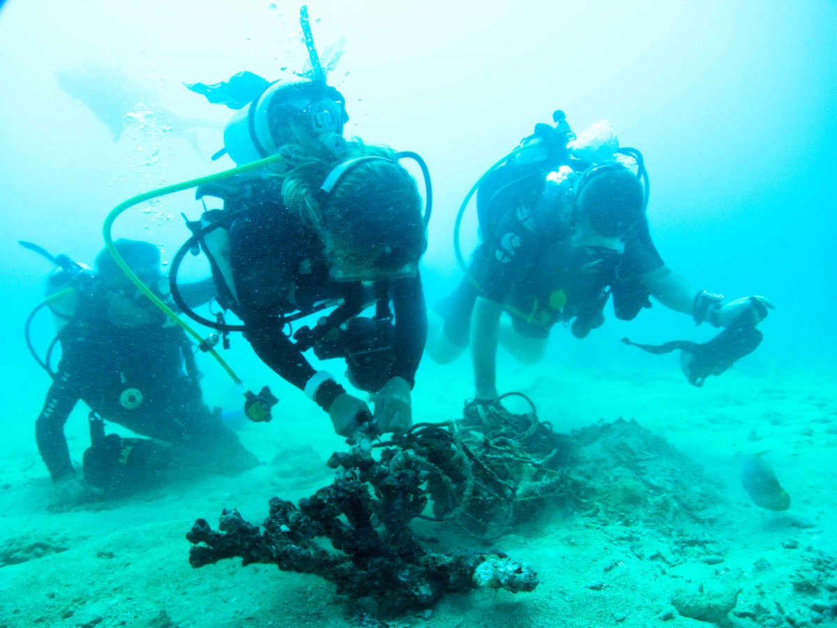 ScubacatIDC on ScubaTribe - ratings and reviews for scuba